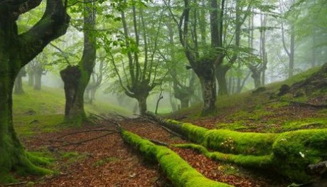 The Green, Natural Basque Country