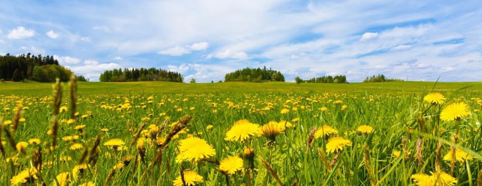 Special Spring-Summer